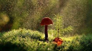 Скачать Дождь в лесу Пение птиц Моментальное расслабление