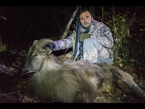 Himalayan Blue Sheep and Tahr HUNTING in NEPAL