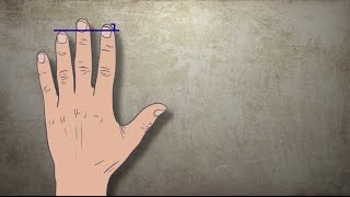 Анализ характера по длине пальцев