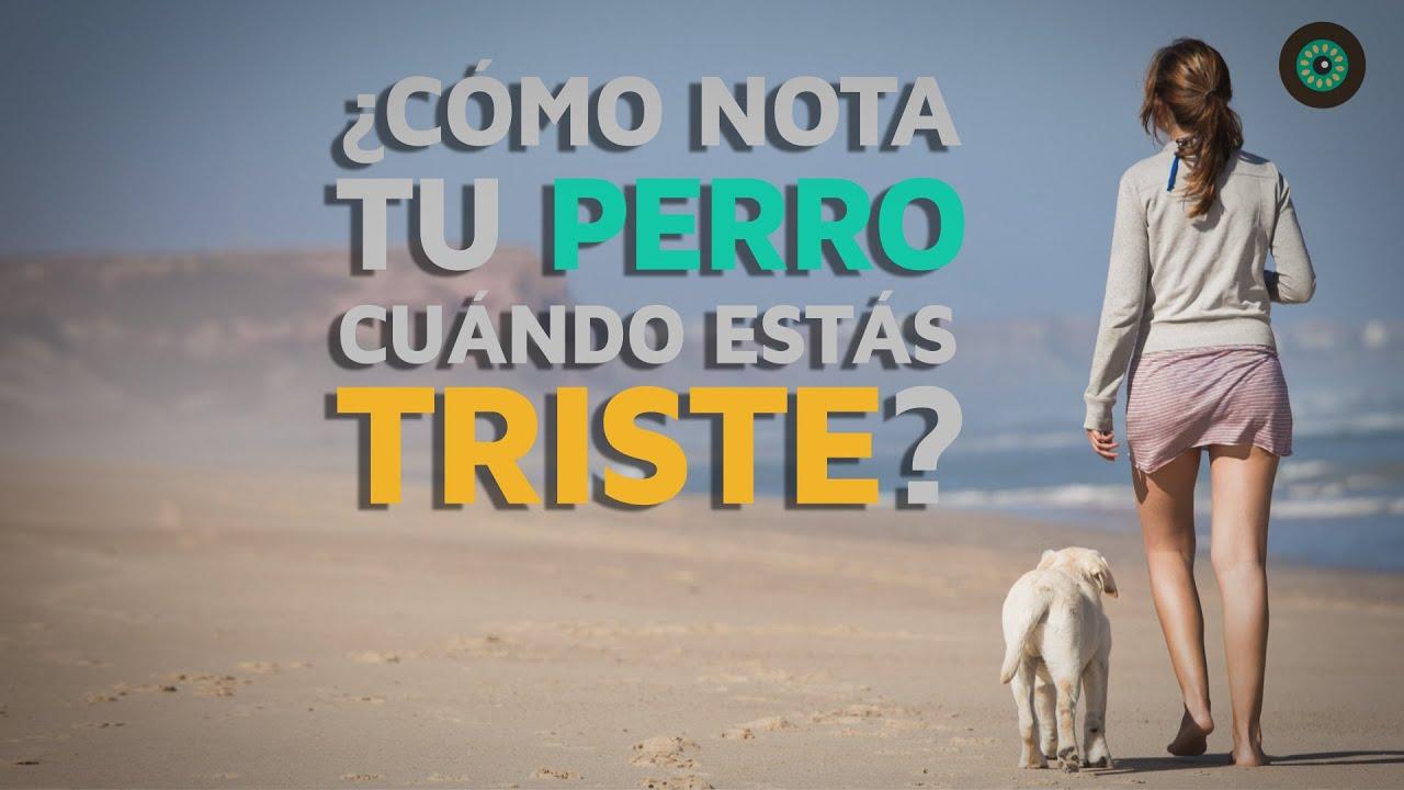 Tu Ta Triste Porque: ¿Por Qué Nota Tu Perro Cuando Estás Triste?