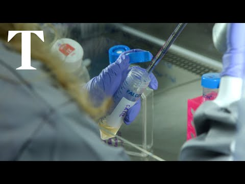 The Race To Create A Coronavirus Vaccine | Times News
