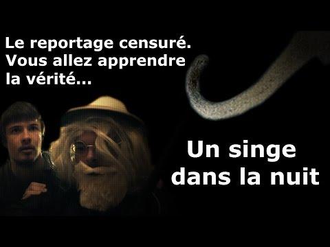 Reportage censuré: Un singe dans la nuit.