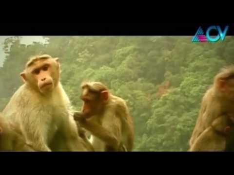 Banks of the Kaveri - Journey to Thala Kaveri Part 2