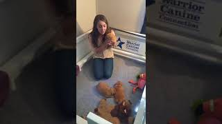 Funny Puppies And Cute Puppy Videos Compilation 2018