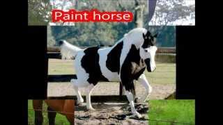 Manti particolari,colorazioni e razze dei cavalli