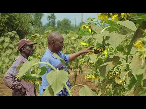 Farming with Conservation Agriculture in Kenya