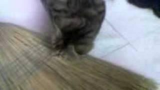 Video(05).3gp