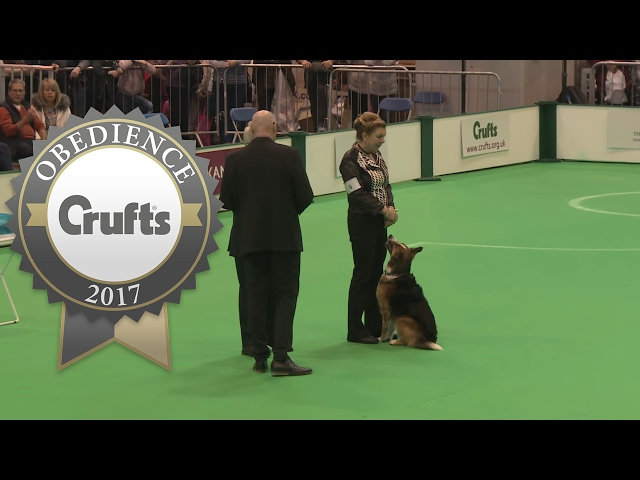 Obedience Championship - Dogs - Scent - Part 2 | Crufts 2017