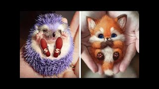 🔴 Baby Animals Funny Cats and Dogs Videos Compilation (2020) #7 | Cute animals
