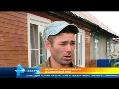 Ядовитые пауки атаковали Краснодарский край - YouTube