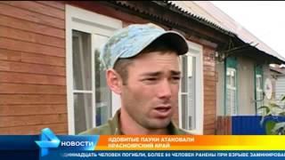 Ядовитые пауки атаковали Краснодарский край