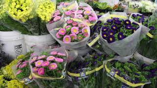 Flower growers gearing up for Mother's Day