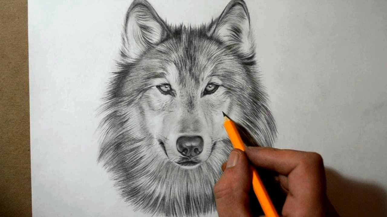how to draw a wolf youtube
