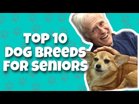 top-10-best-dog-breeds-for-seniors-and-retirees-|-best-dog-breeds-for-seniors