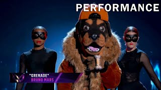 "Rottweiler sings ""Grenade"" by Bruno Mars 