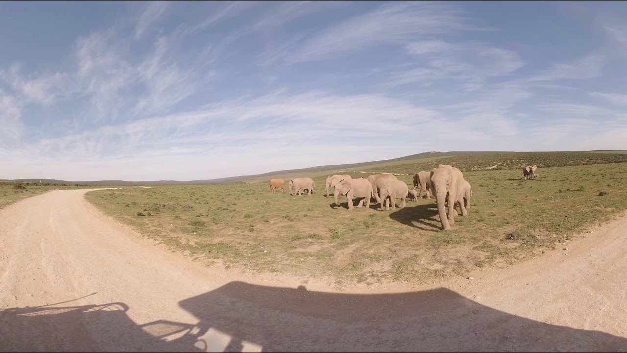 360 Vr Video Of Addo Nomad Africa Adventure Tours