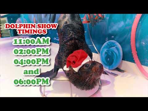 Dubai Dolphinarium Christmas Promo