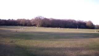 flying parrot ar drone 2.0 over Southampton common