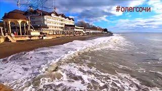 🔔Встретил Шарика на пляже/Бакланы на пирсе/Сочи Лазаревское 24 Января 2020 зимой #олегсочи