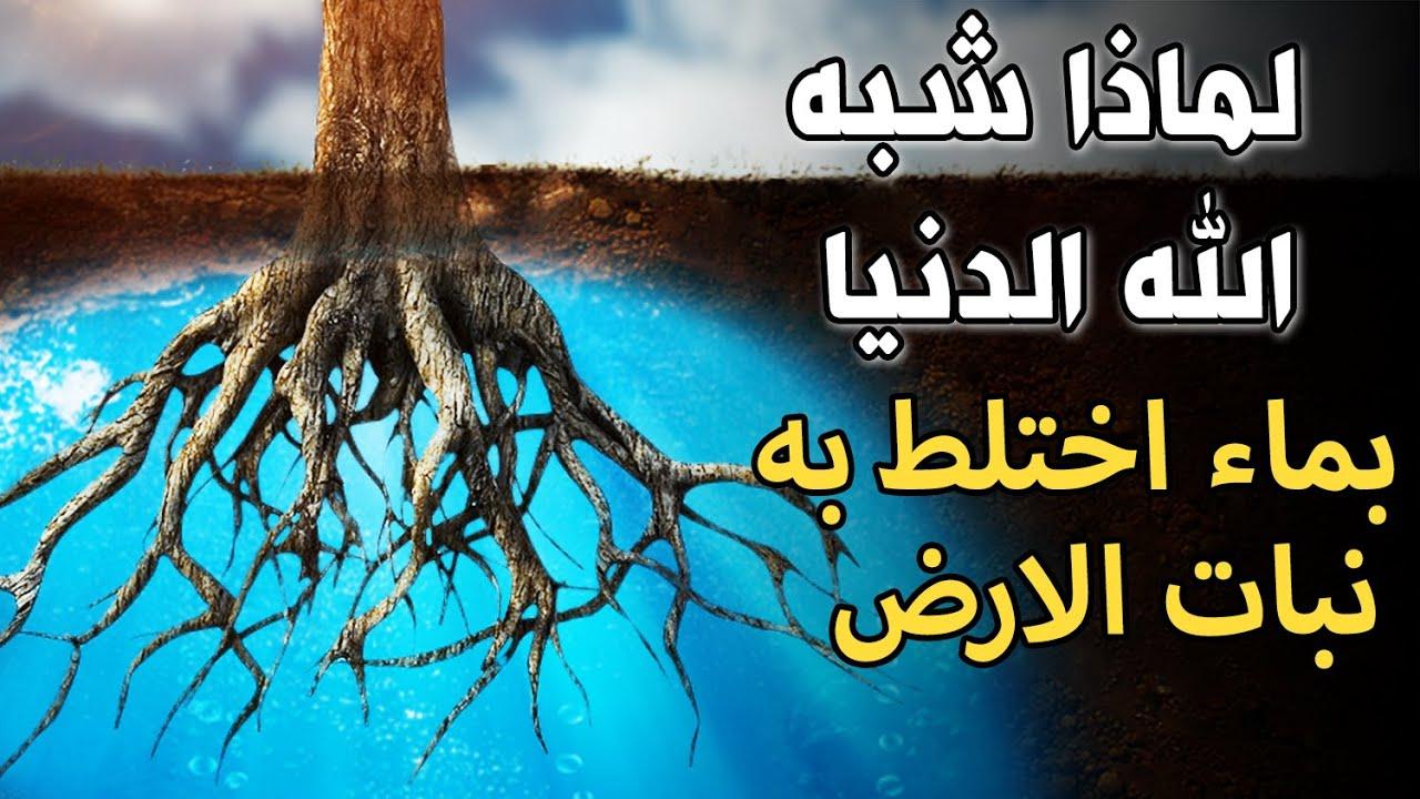 لماذا شبه الله الدنيا بماء اختلط به نبات الأرض ؟ كما ذكرت فى الايه الكريمة !