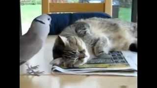 鳩・・・遊ぼうよ~ 猫・・・うるさいにゃ~~(でも、ちょっと嬉しい)...