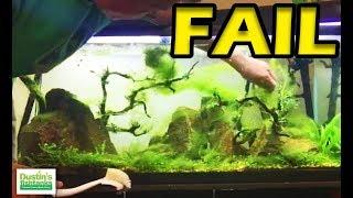 No Maintenence Tank -FAIL- Aquarium Algae Mess Causes LIVE thumbnail
