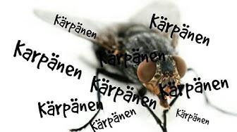 Kärpäs-Dokumentti