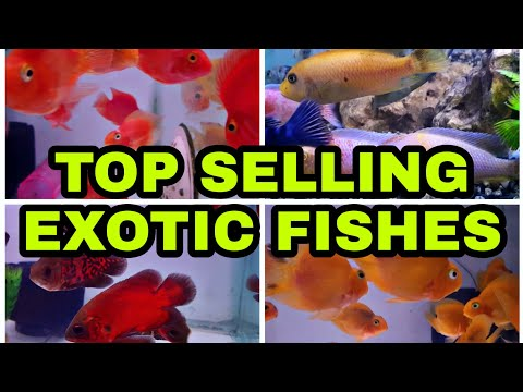 COLORFUL EXOTIC FISHES | CICHLID FISH | OSCAR FISH | PARROT FISH