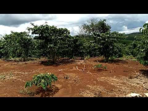 1,1ha đất nông nghiệp cho ac làm rẩy, giá mền sổ đầy đủ.