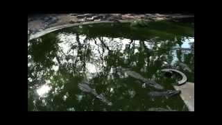 В Таиланде Шоу крокодилов, слонов, змей..... Паттайя
