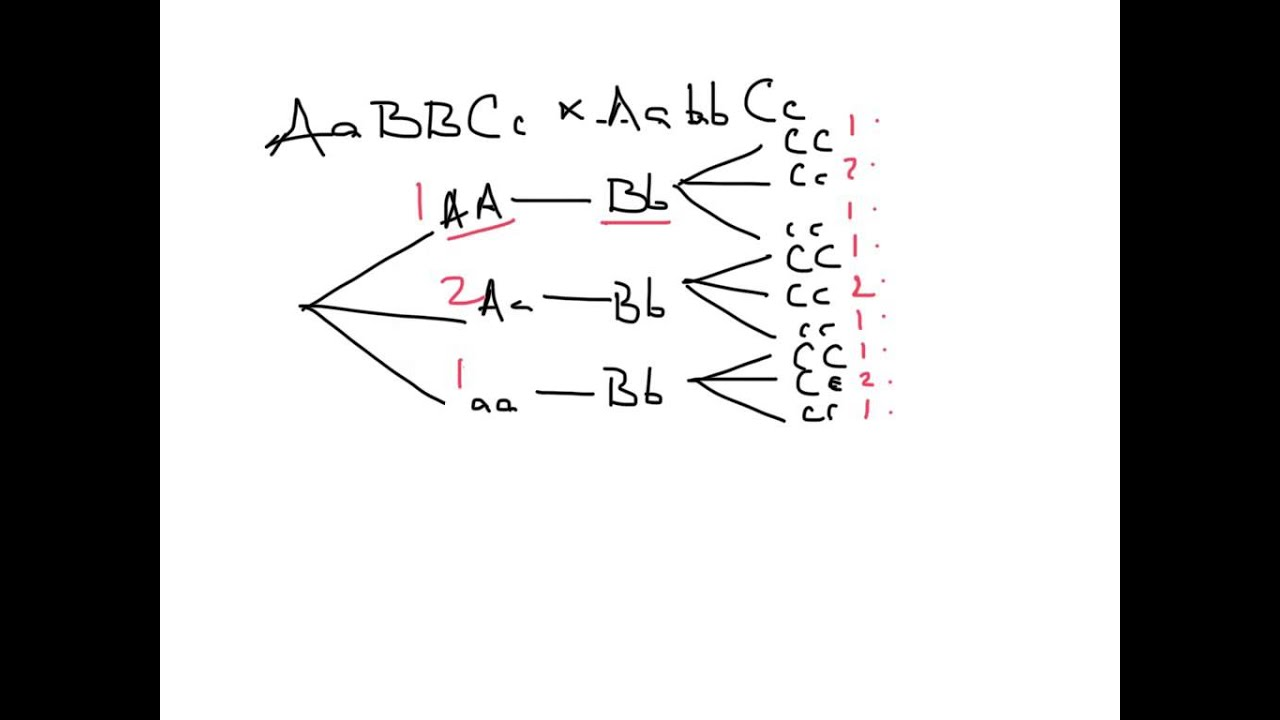 Branches Branching Tree Diagram Goodman Wiring Thermostat Using Branch Diagrams Youtube