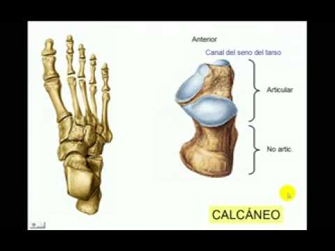 OSTEOLOGIA DE MIEMBRO INFERIOR 9 Diagnostico X - YouTube