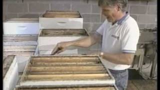Honey Bees and Beekeeping 6.4: Commercial honey processing