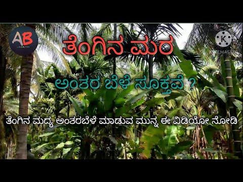 Download ತೆಂಗಿನಲ್ಲಿ ಅಂತರ ಬೆಳೆ ಸೂಕ್ತವೆ | ಅಡಿಕೆ | ಬಾಳೆ | ಕೊಕೊ | coconut tree forming |