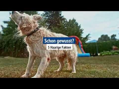 Fellwechsel beim Hund - Achtung es wird haarig