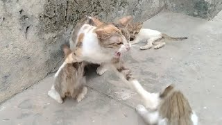 Mother Cat Attacking On Orphan Kitten After Smelling Her