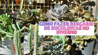 Replante da #Euphorbia MAMMILLARIS VARIEGATA e berço de inverno e #suculentas GIGANTES.