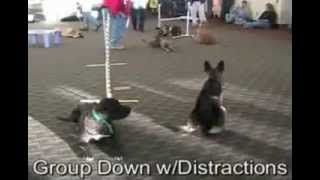 Phoenix Arizona Dog Obedience Classes/sit Means Sit