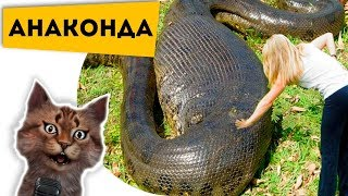 Беги, а то съедят!!! Самая большая змея на земле! Познаватель кот Семен Ученый