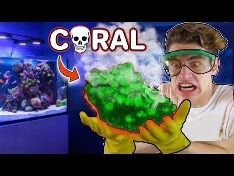 Finding TOXIC CORAL in MY FISH TANK! 😵 (ARE YOU IN DANGER?) 💀