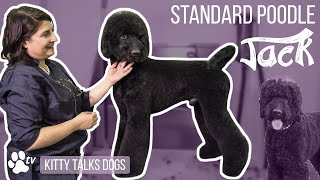 Kitty Talks Dogs: grooming Jack the Standard Poodle | TRANSGROOM