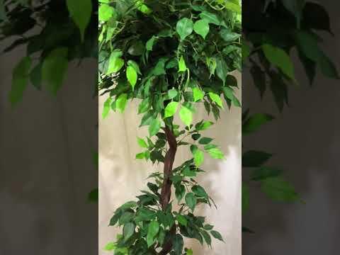 Искусственное дерево Фикус зеленый
