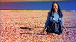 My BIGGEST Regret on My BIGGEST Video: Cranberry Harvest