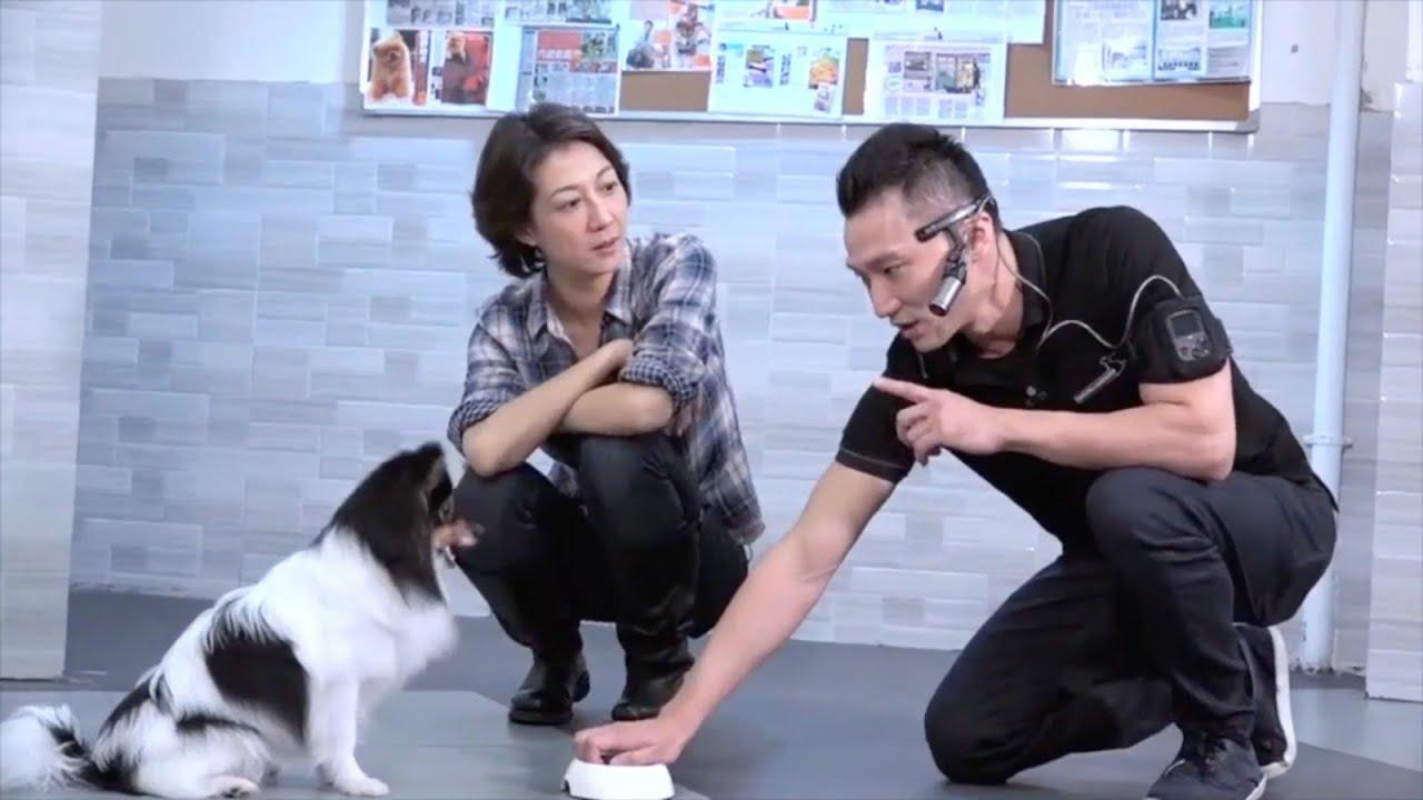 煉狗術師Eric Ko教你點樣避免寵壞狗仔 示範將過度活躍癥狗仔由亂跳亂咬 訓練到乖乖坐低 - YouTube