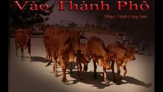 Đàn bò vào thành phố - Minh Châu Phạm