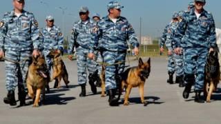 Фильм о приграничном сотрудничестве полицейских РК и РФ