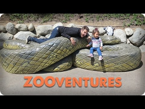 ZOOventures | DADventures: The Nive Nulls