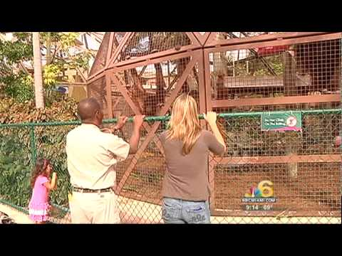 Jungle Island on NBC Miami