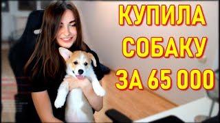 AhriNyan Показала Собаку За 65 000 р.