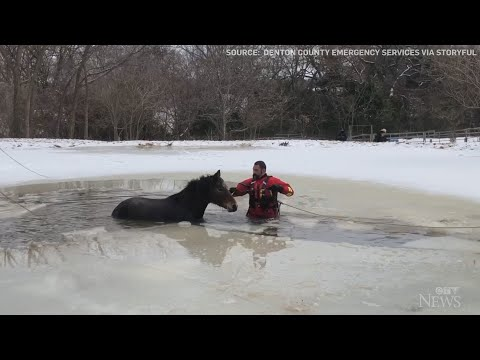 Caught on cam: Horse rescued from icy Texas pond